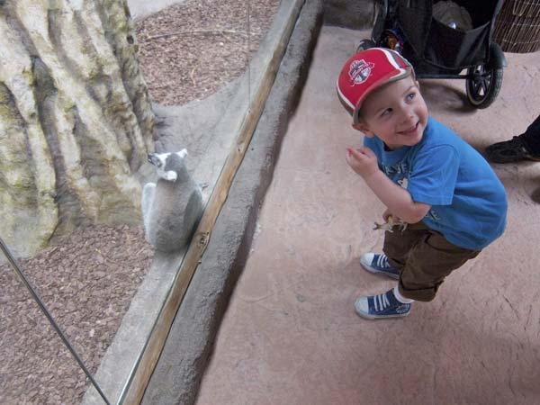 Kid with Lemur at Toronto Zoo