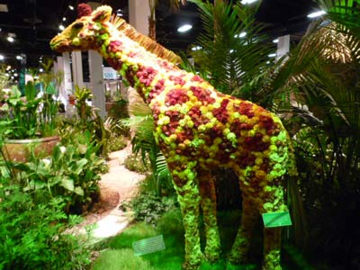 Safari Exhibit at Boston Flower Show 2010