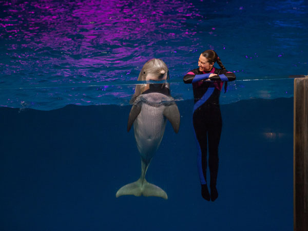 Dolphin and Trainer at Georgia Aquarium